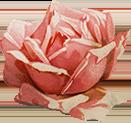 grafica rosa vintage