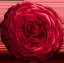 illustrazione fiore