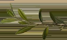 foglie vintage