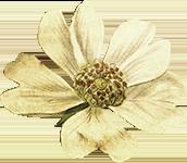 immagine fiore vintage